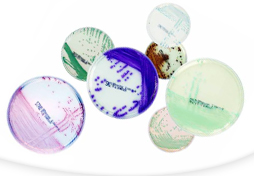 C004)発色酵素基質培地 chromID™ シリーズ
